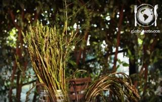 asparagi-selvatici