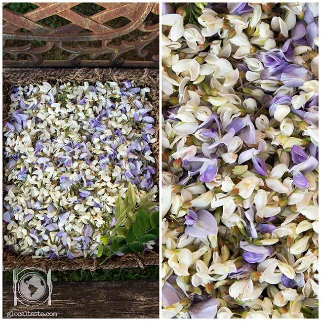 fiori-glicine-acacia
