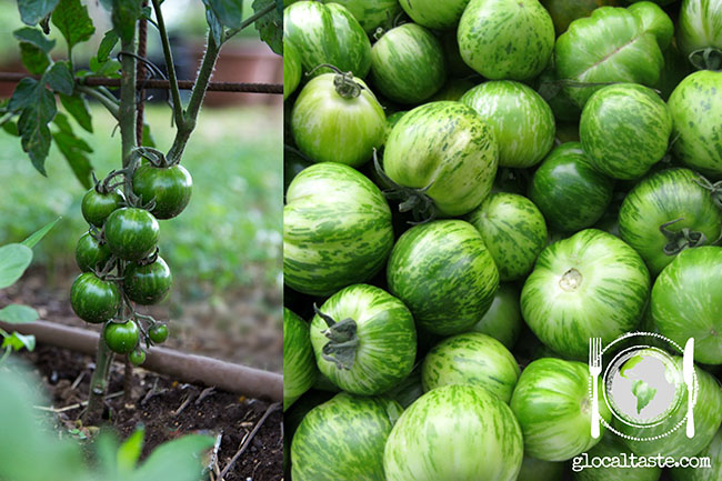 pomodori-cimelio-green-zebra