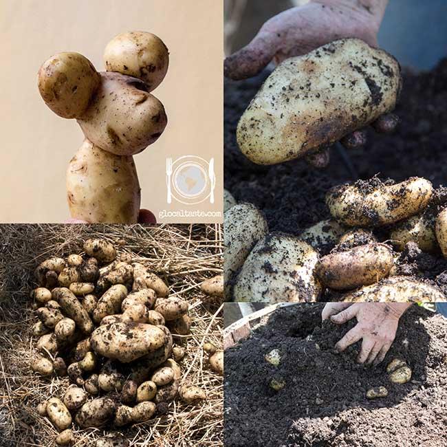 patate-novelle